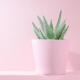 Les vertus hydratantes, apaisantes et reminéralisantes de l'Aloe Vera font d'elle une plante privilégiée pour les peaux sensibles et réactives.⠀⠀⠀⠀⠀⠀⠀⠀⠀ ⠀⠀⠀⠀⠀⠀⠀⠀⠀ C'est pour cela que nous avons choisi d'en incorporer dans nos mascaras, nos soins et démaquillants afin de garantir un maximum de confort et d'apaisement à votre peau fragilisée.⠀⠀⠀⠀⠀⠀⠀⠀⠀ ⠀⠀⠀⠀⠀⠀⠀⠀⠀ #natorigin #aloevera #hydratation #confort #apaisement #peaufragile #peausensible #cleanmakeup #cleanbeauty